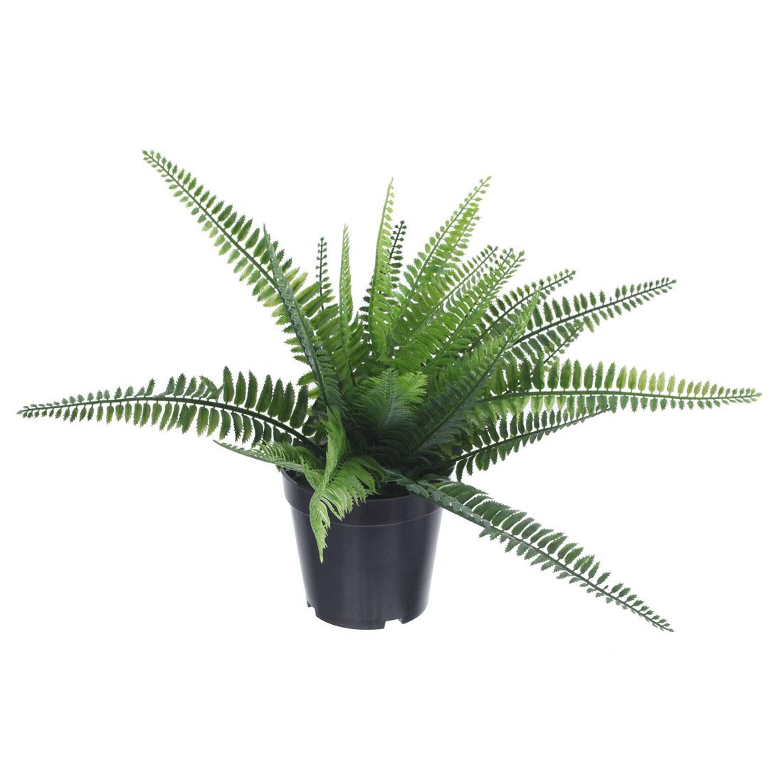 """Декоративное растение """"Папоротник"""" [06646],"""