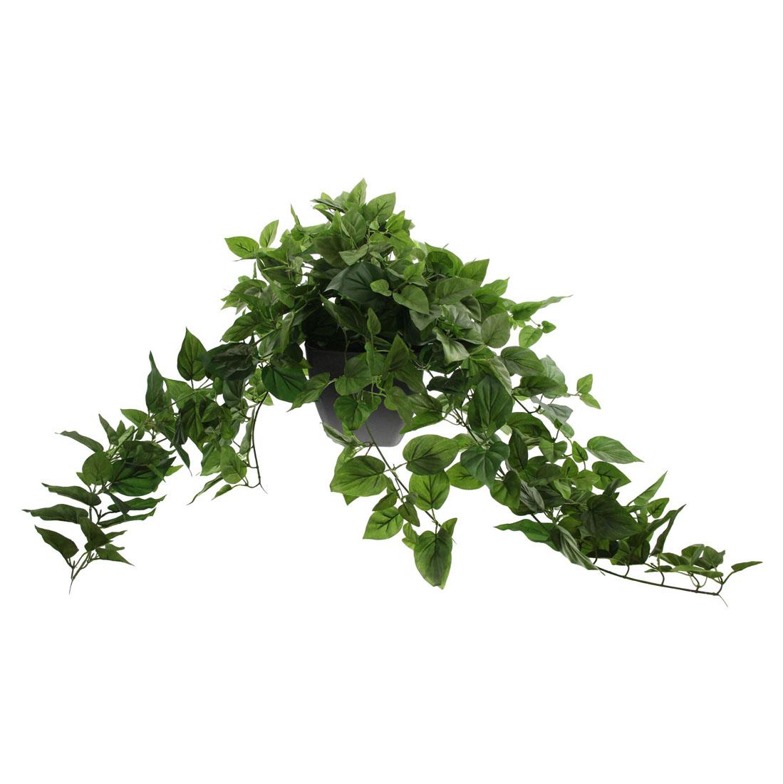 "Декоративное растение ""Плющ"" [06970],"