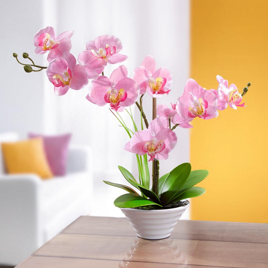 """Декоративное растение """"Орхидея"""" [07104],"""