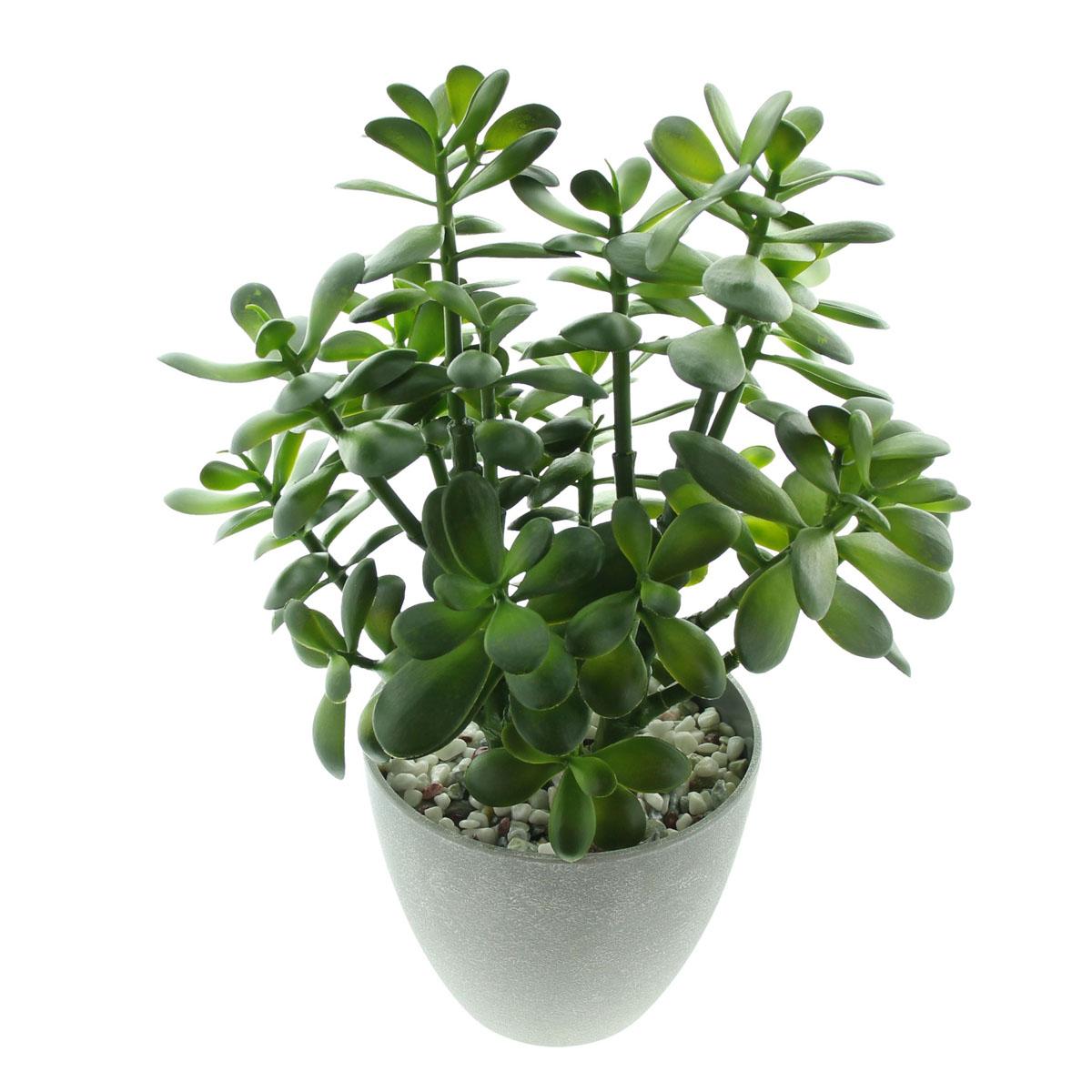 """Декоративное растение """"Крассула овата"""" [08006],"""