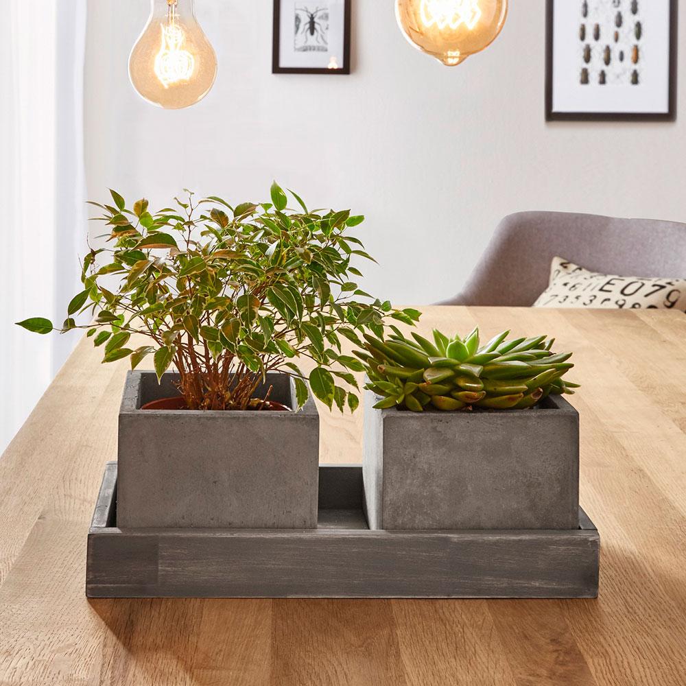 Поднос для растений, 3 части