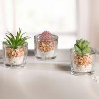 """Декоративные растения """"Суккуленты в вазочках"""", 3 штуки [07268],"""