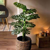 "Декоративное растение ""Филодендрон"" [07422],"