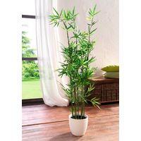 """Декоративное растение """"Бамбук"""""""