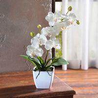 Декоративная орхидея в горшке